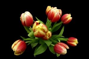 Tulipany na Dzień Matki